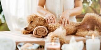 Reflexology For Animals