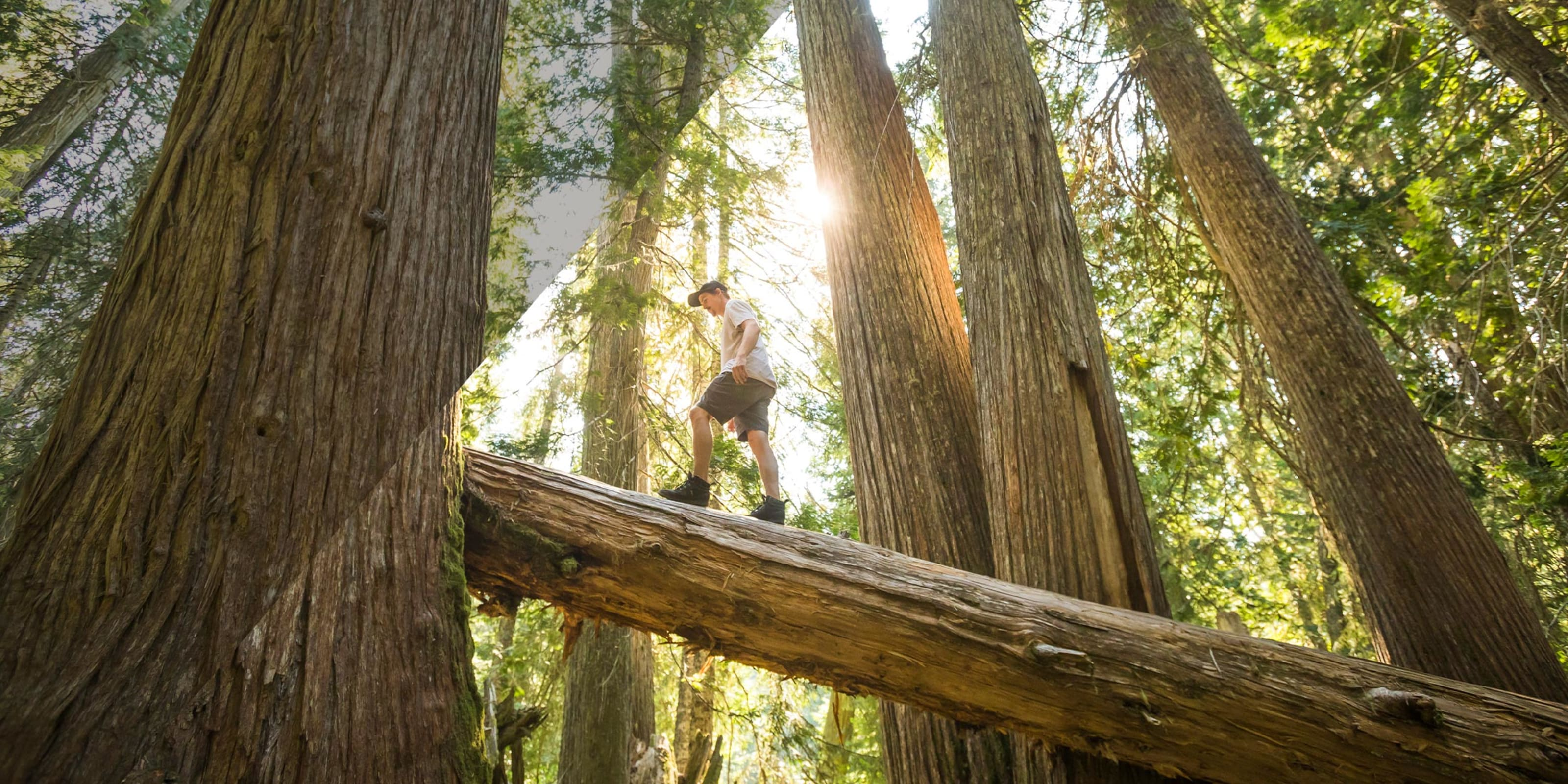 Forest bathing in Whistler BC