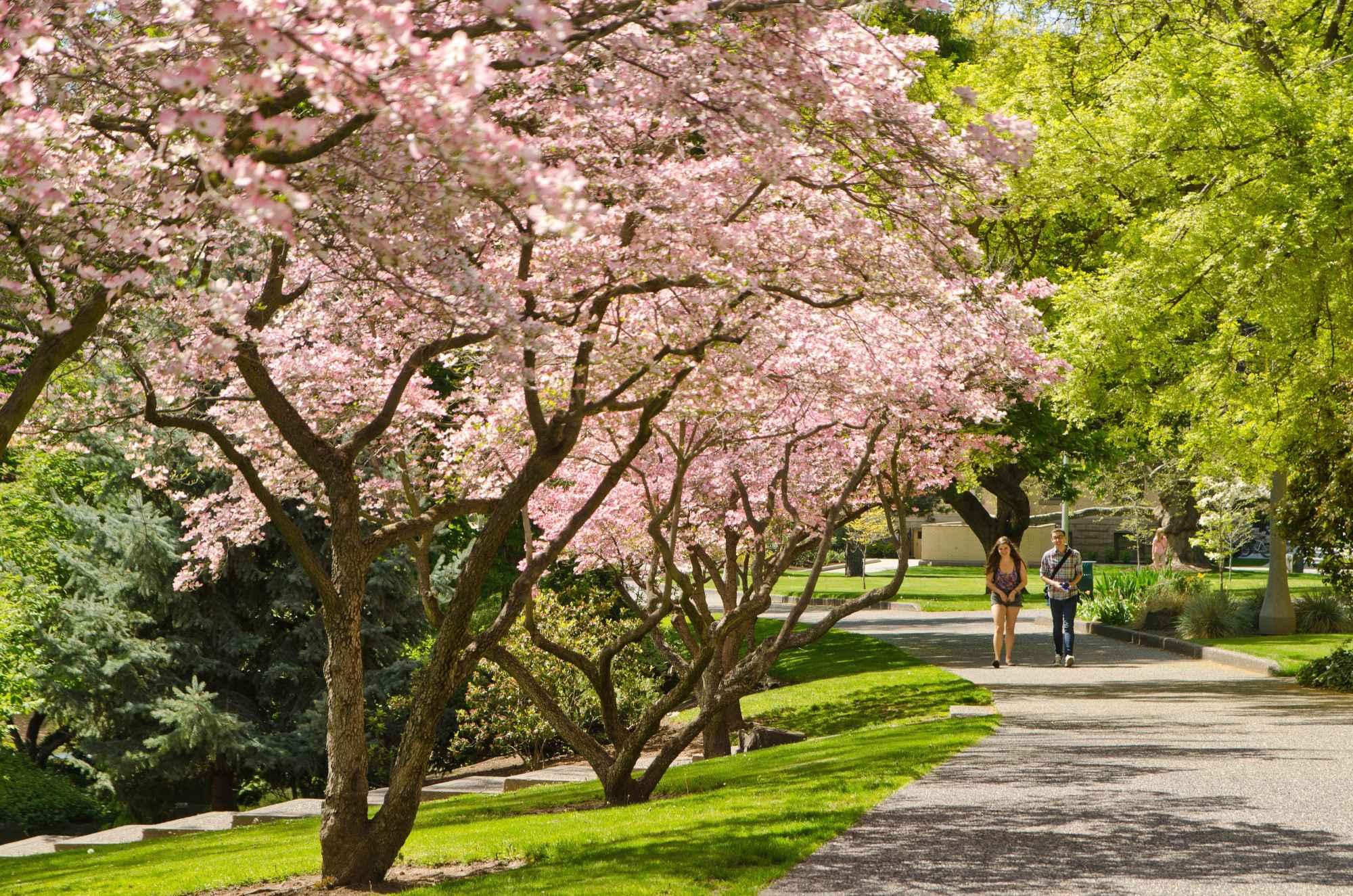 Campus, spring