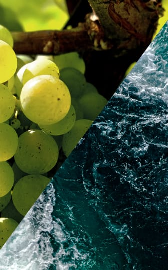 Frisch wie der Ozean: Sauvignon Blanc