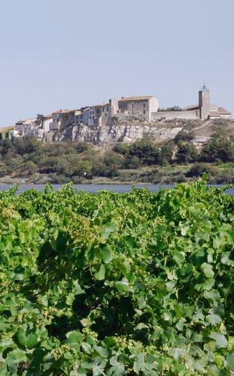 Weinreben im Languedoc