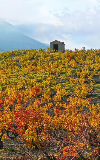 Herbstlicher Weinhügel im Languedoc