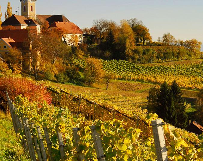 Idyllischer Weinberg in Österreich