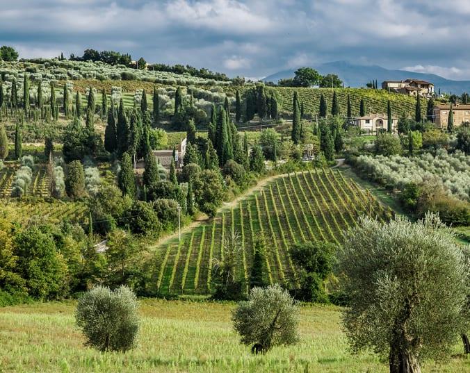 Toscaanse wijnen