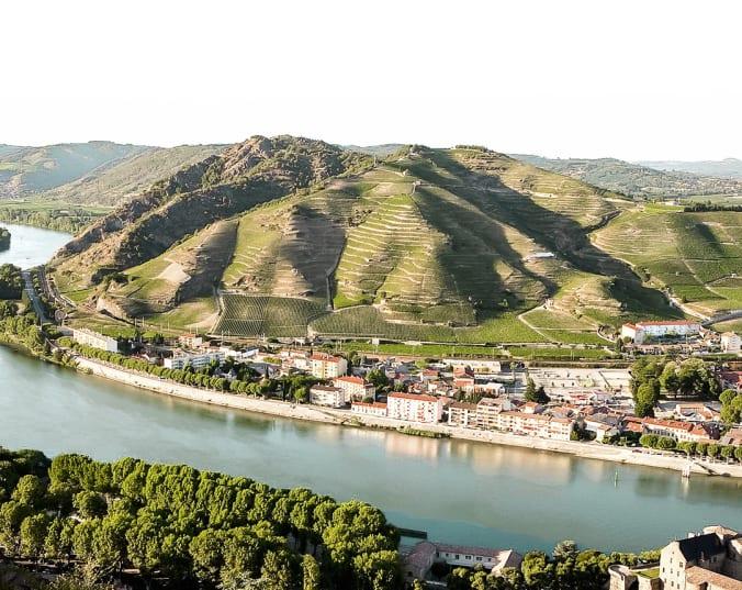 Wijnen uit de Rhône regio