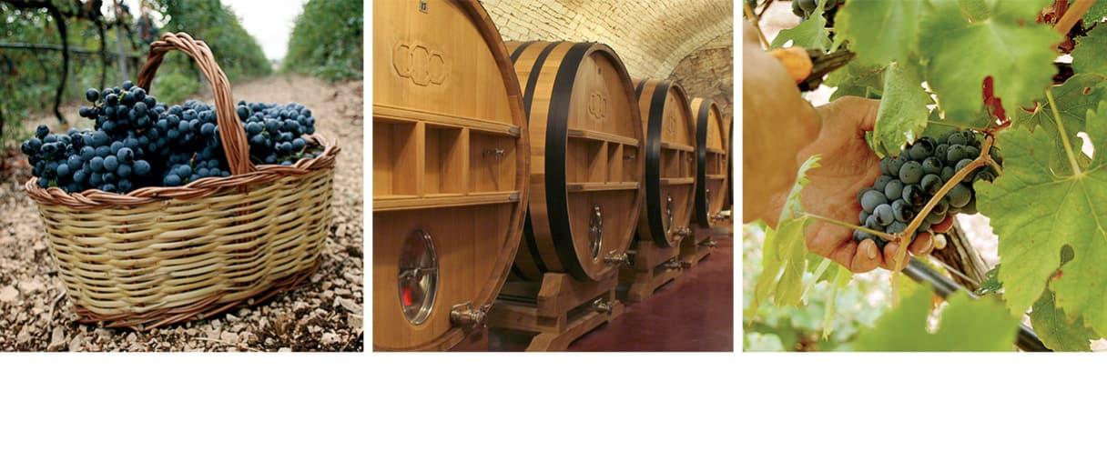Wijngoed Azienda Vinicola Torrevento