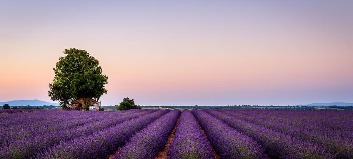 Rhône Lavendelfelder