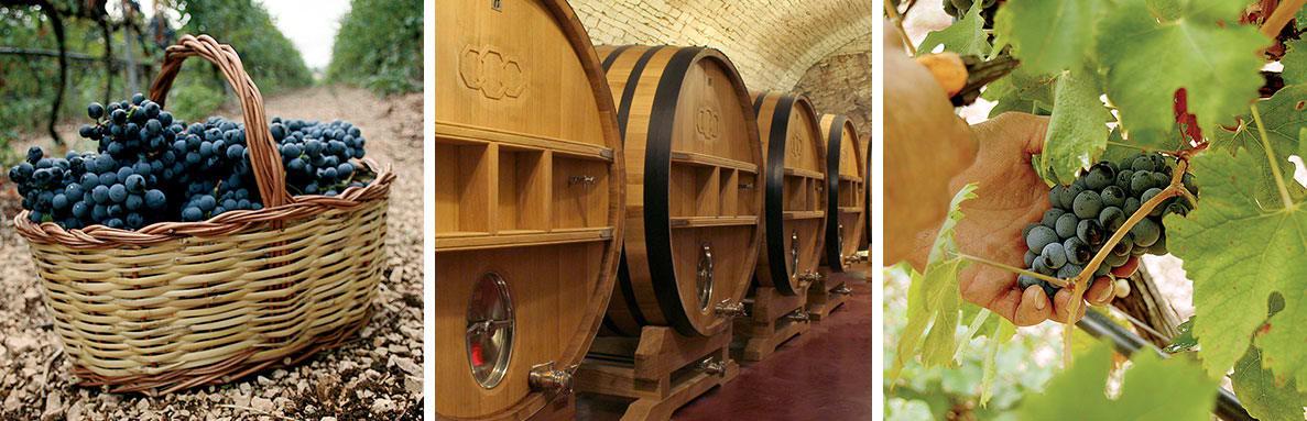 Azienda Vinicola Torrevento Weingut