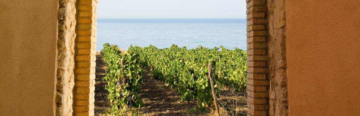 Cantine Paolini - Ausblick vom Weingut auf die Weingärten und das Meer