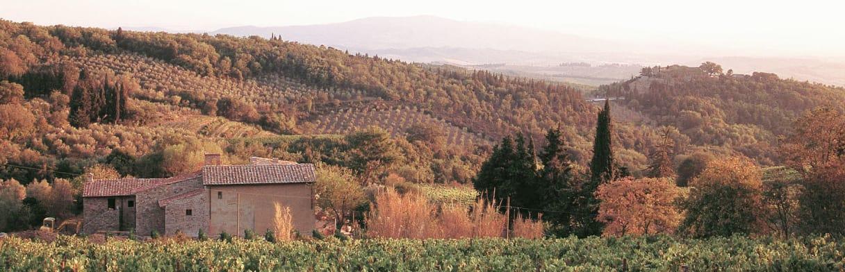 Castellare di Castellina Weingut