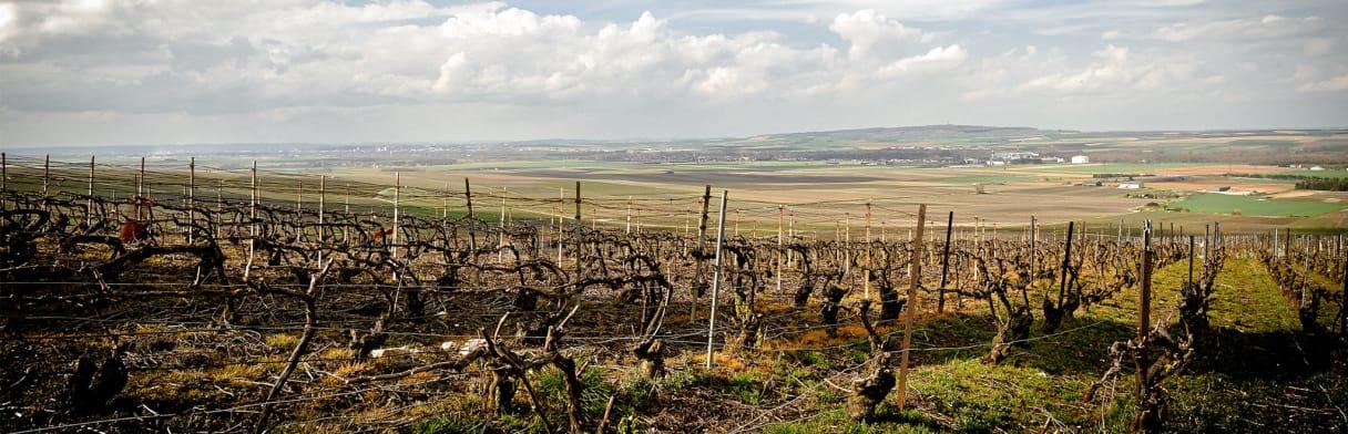 Champagne D. Henriet-Bazin Weingärten im Frühling