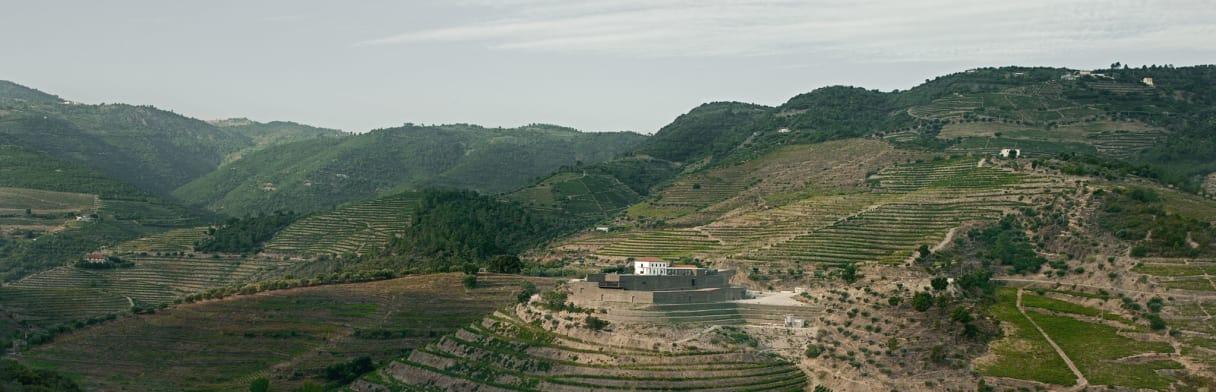 Niepoort Weingärten