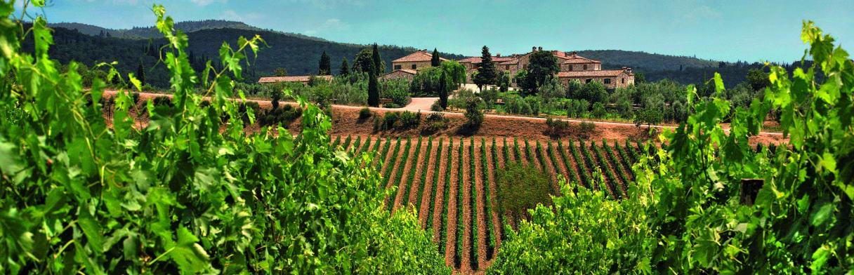 Rocca delle Macìe Weingut mit Weinreben im Vordergrund