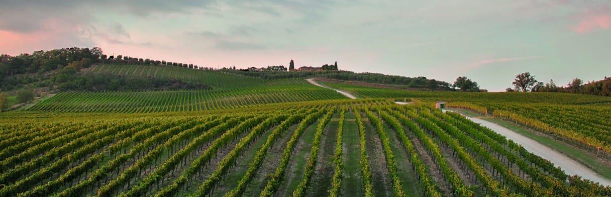 Rocca delle Macìe - Weinreben Landschaft