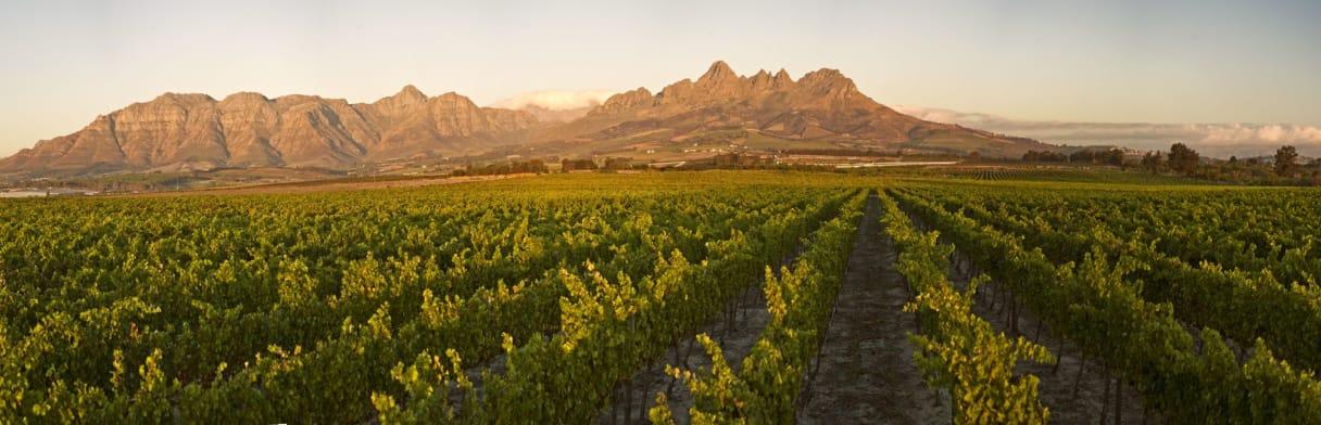 The Winery of Good Hope Weingut mit Berglandschaft im Hintergrund