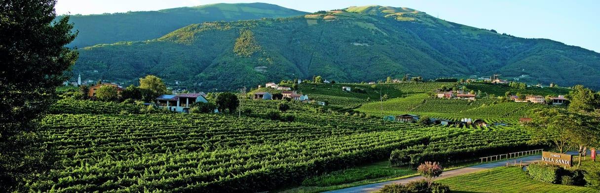Villa Sandi Weingut und Weinreben