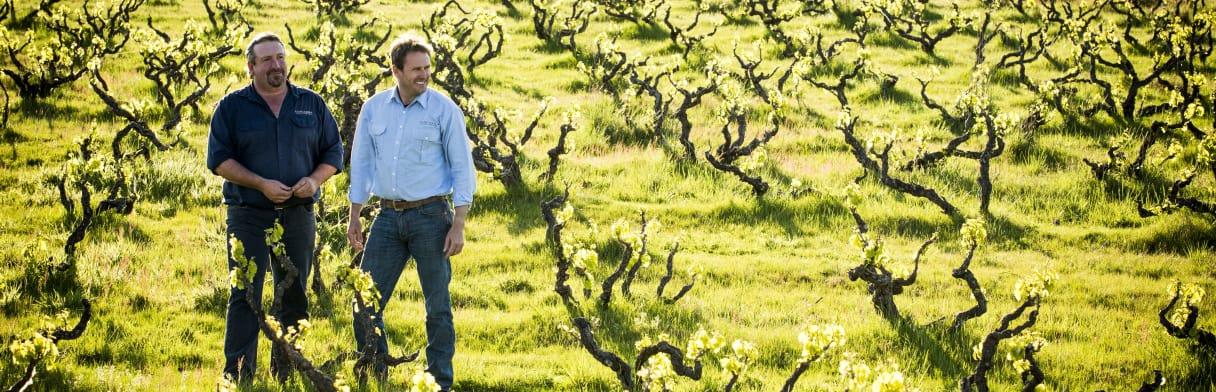 Yangarra Estate Vineyard Weingut