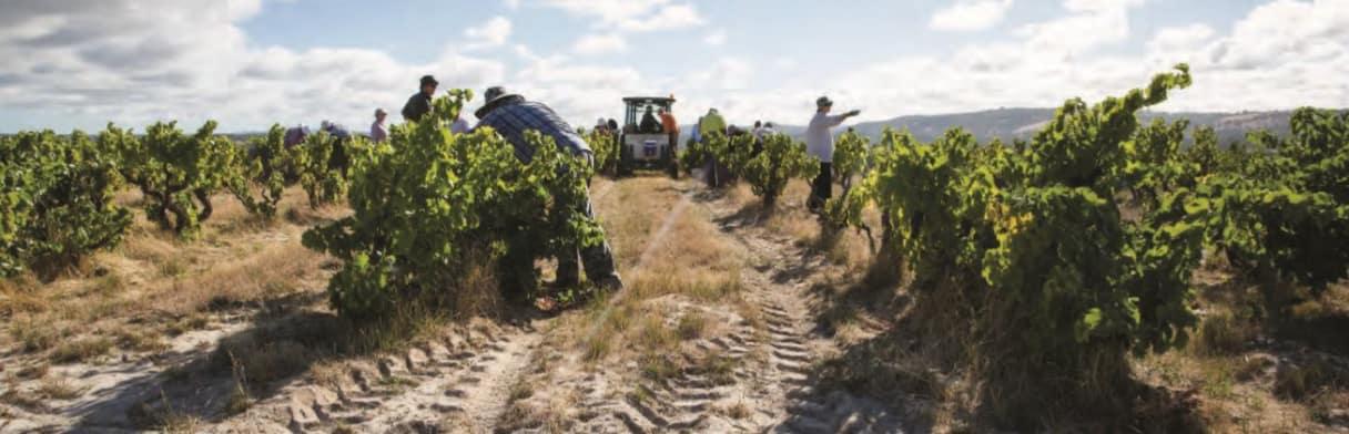 Yangarra Estate Vineyard Winzer
