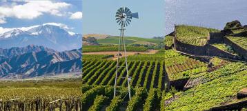 Wijnen uit de Nieuwe Wereld