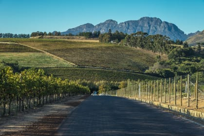 Weinbau in Südafrika, Weinberg
