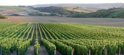 Burgund Wein