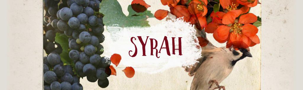 De beste syrah-wijnen voor een actieprijs!