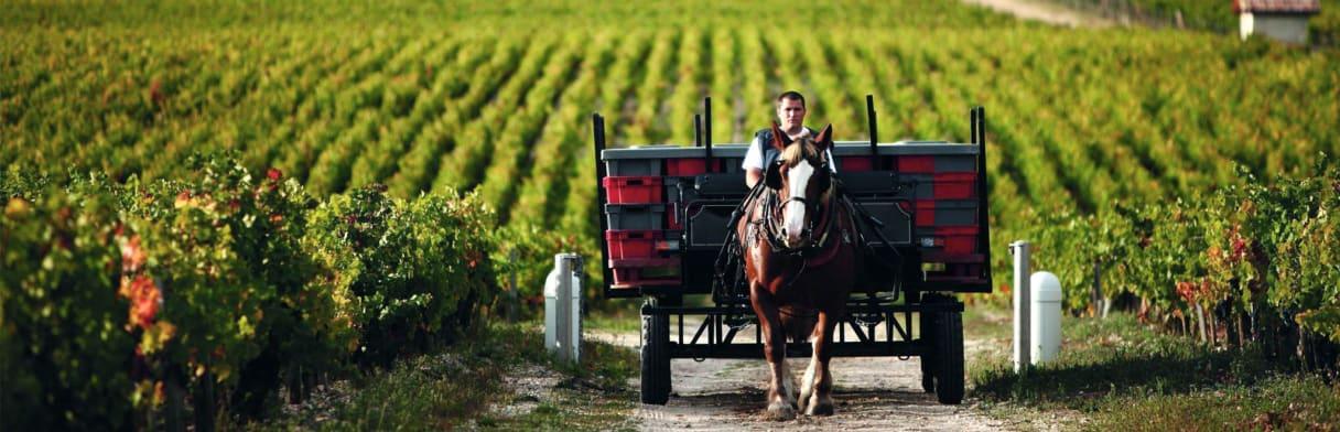 Bordeaux landschaft tasting Set Wine in Black