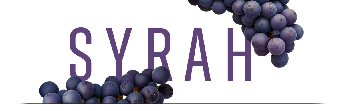 Syrah rules bei Wine in Black