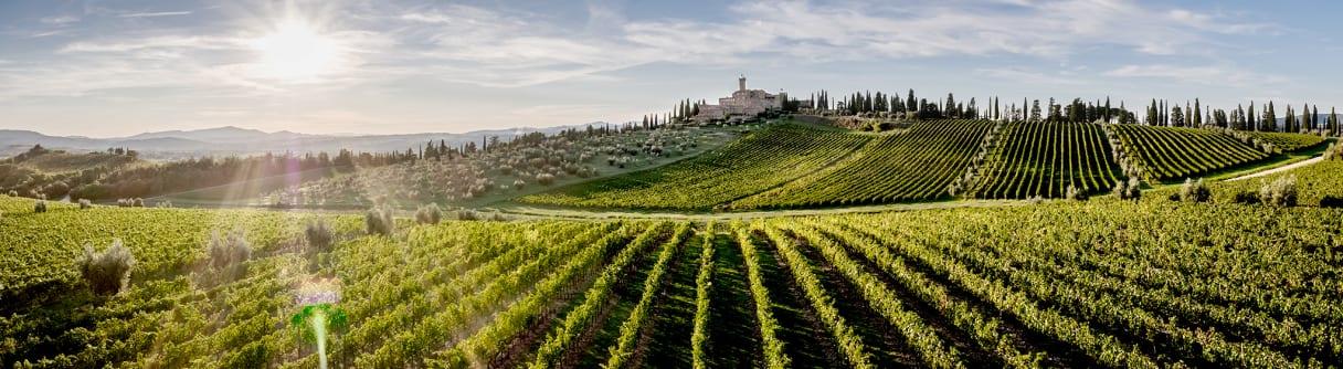 Panorama du Castello Banfi avec des vignes au premier plan