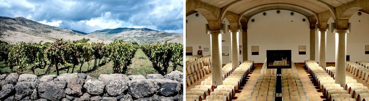 Collage vom Weingut Donnafugata: Rebstöcke auf Sizilien, historischer Weinkeller in Marsala