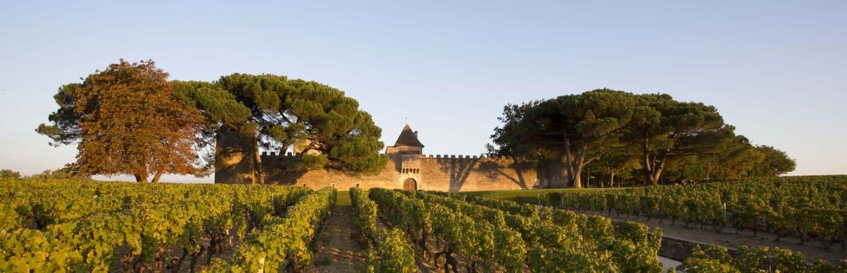 Vignoble Château d'Yquem