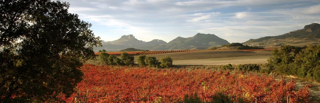 Schilderachtig herfstlandschap in Rioja