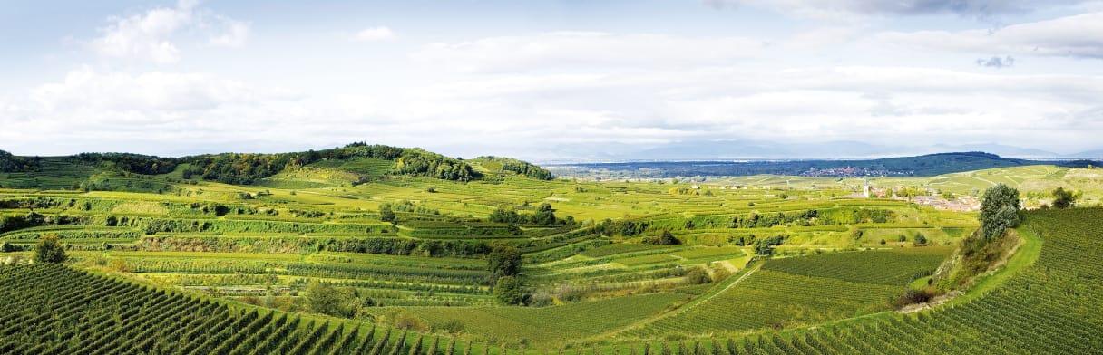 Landschap en wijnstokken in Kaiserstuhl - Pfalz