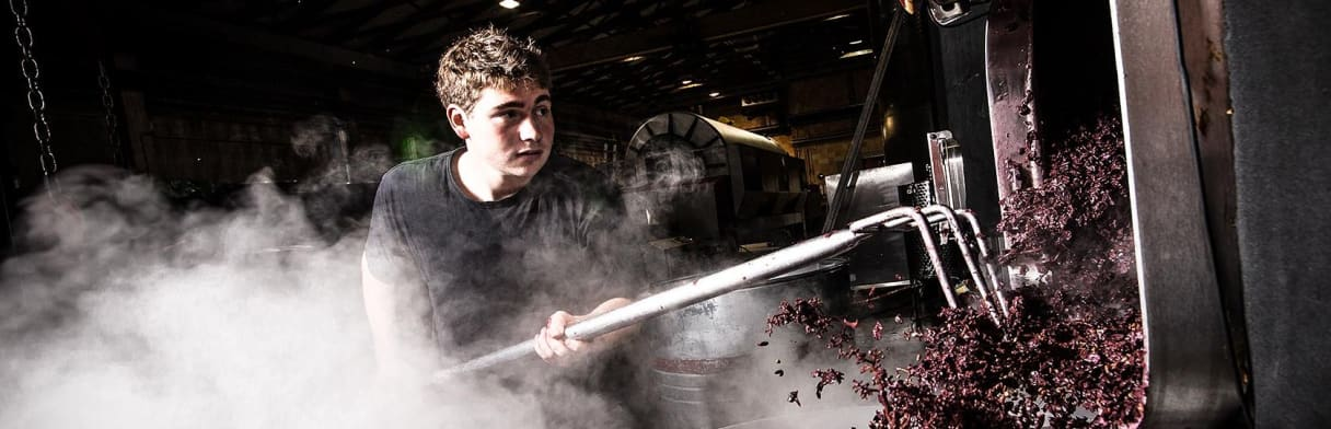 Salwey Weingutshelfer beim Bearbeiten der Maische