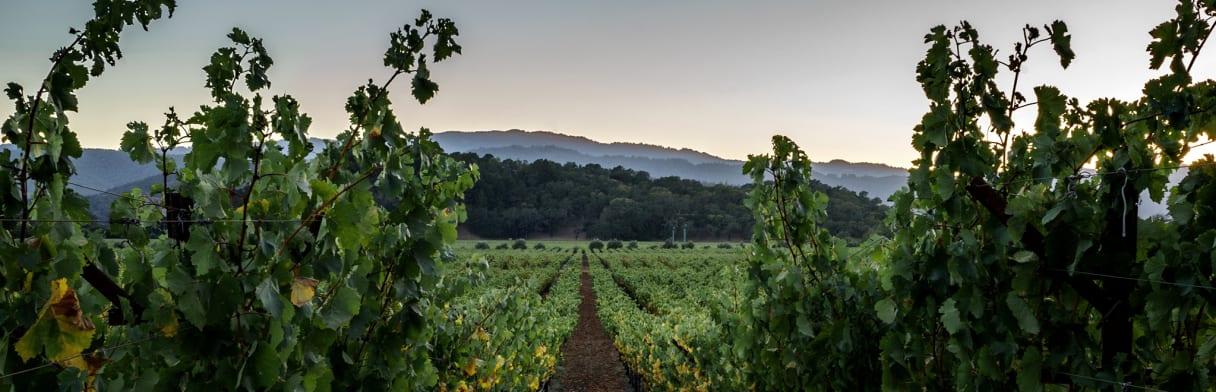 vin, Napa Valley, zinfandel, Lynx, chardonnay, petite sirah, Californie