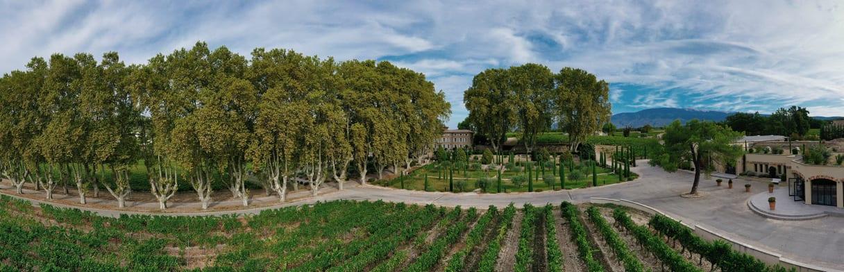 Wijnstokken van wijngoed Château Pesquié