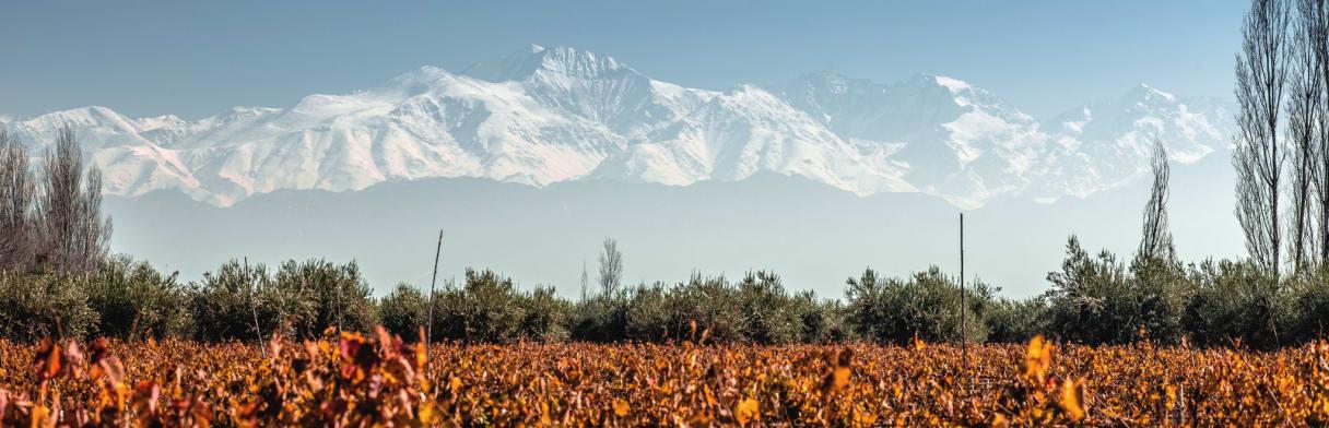 Bodega Achával Ferrer Weinreben mit Anden-Gebirge im Hintergrund