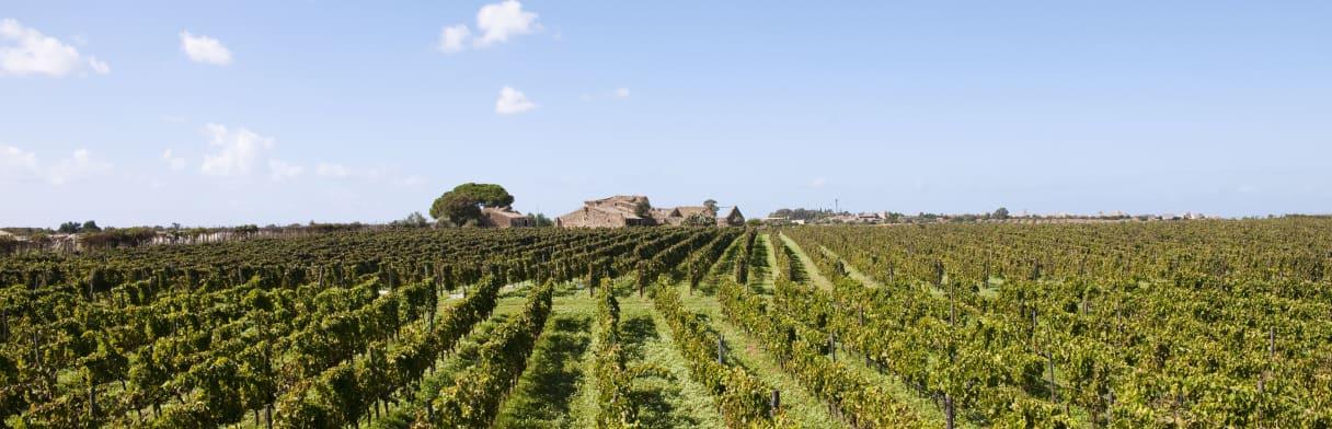 Azienda Agricola COS - Weingut & Weinreben
