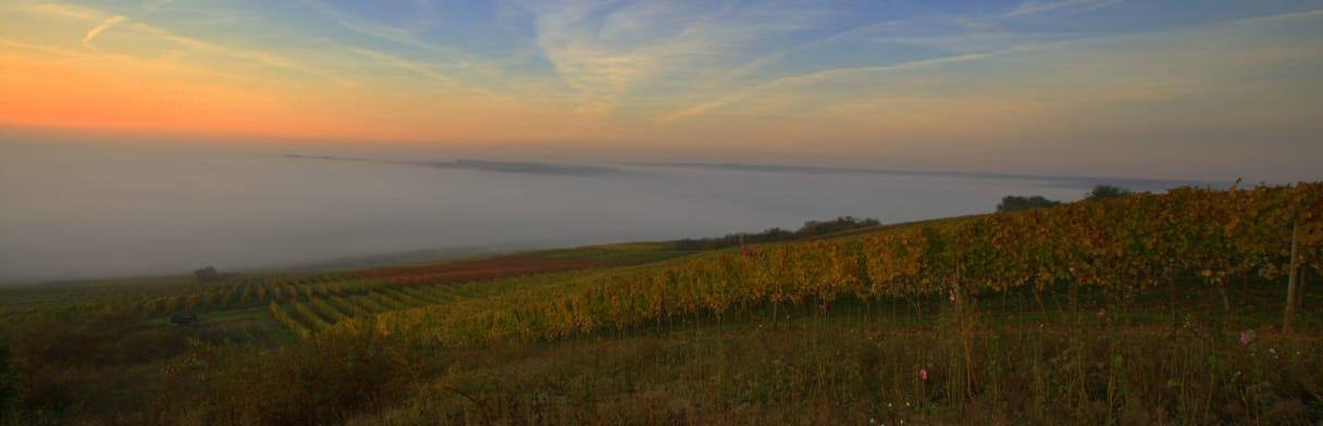 Braunewell Weingärten im Sonnenaufgang