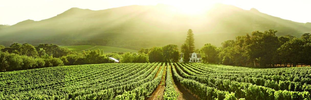 Buitenverwachting Weingut & Rebgärten
