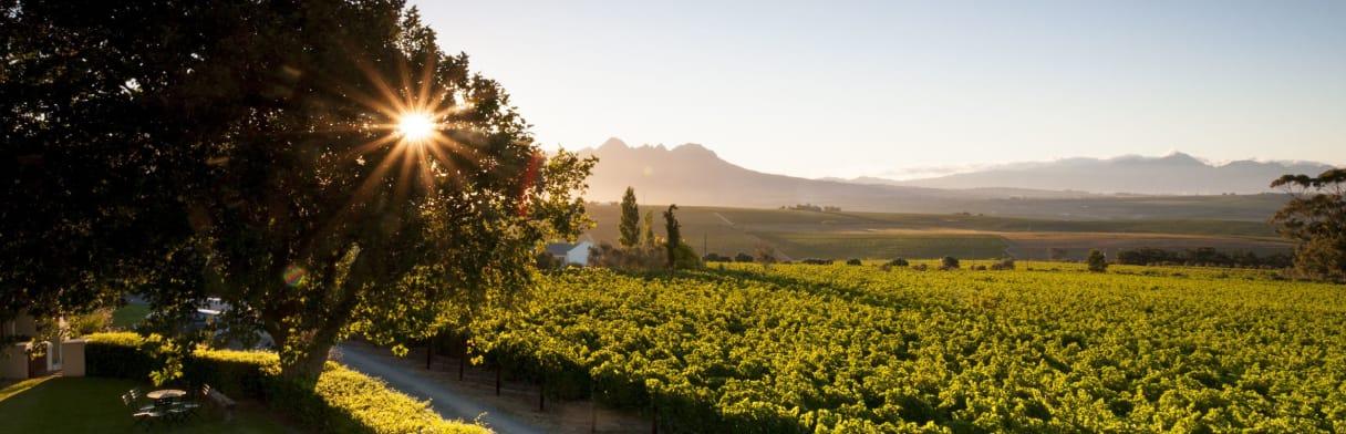De Toren Private Cellar Weingärten im Sonnenuntergang