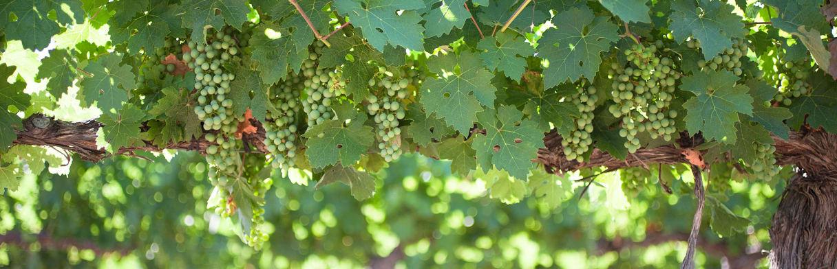 Finca Dehesa del Carrizal Wijngoed
