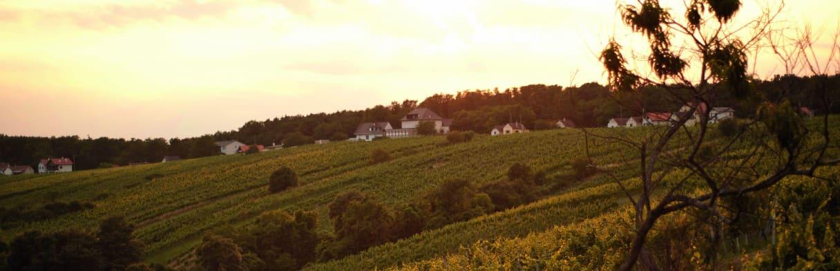 Groszer Wein Wijngoed