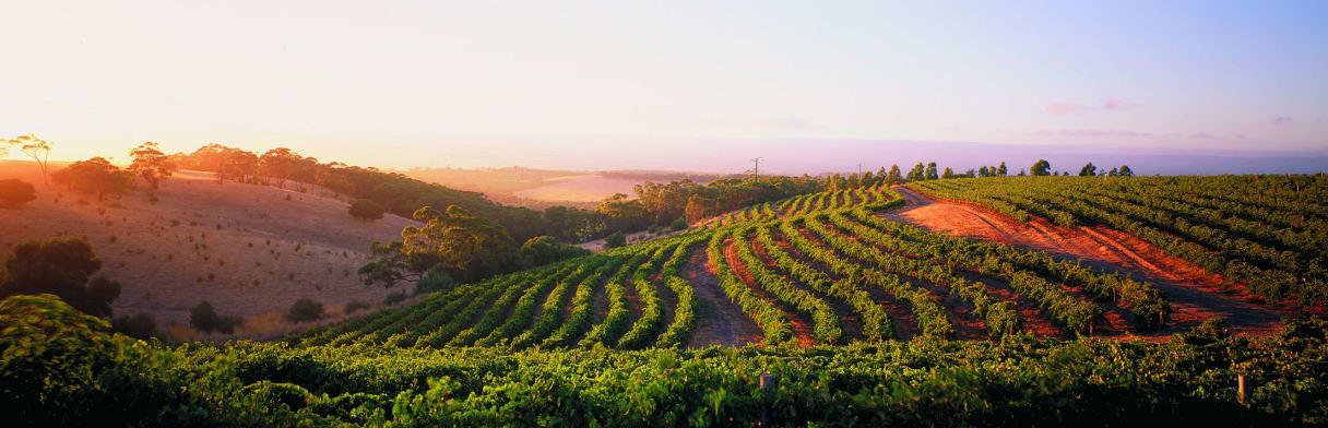 Hardys Wine Weingut