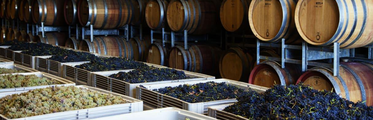 Kilikanoon Wines Wijngoed