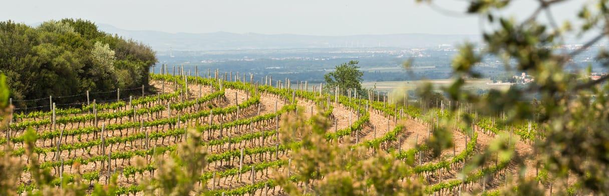 Domaine Lafage Wijnmaker