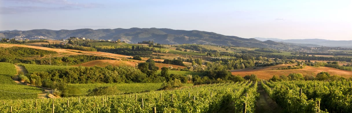 Lungarotti - Landschaft Umbrien