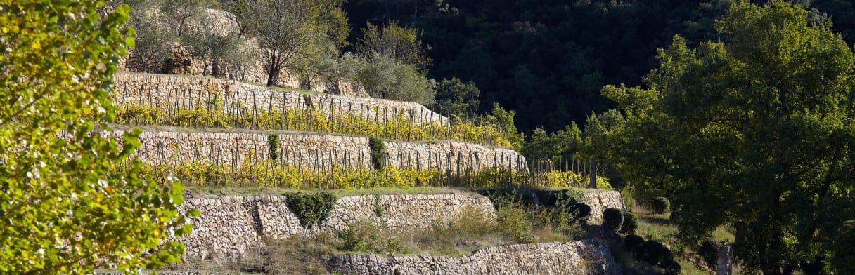 Miraval Weingärten