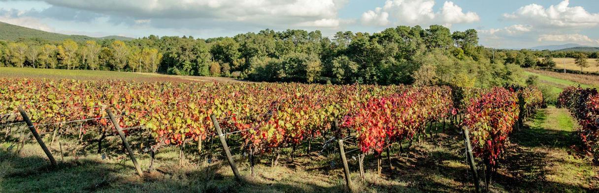 Tenuta Sette Ponti - Weinreben im Herbst