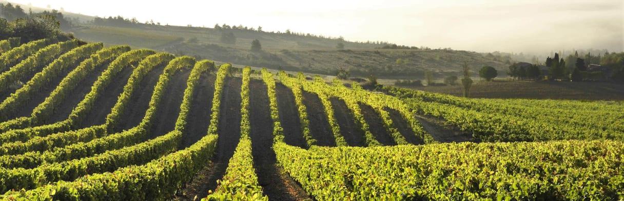 Les Vignerons du Sieur d'Arques Wijngoed